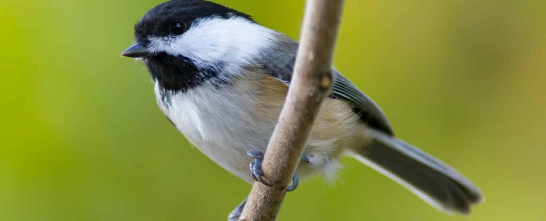 Reedy-Creek-Nature-Preserve.jpg