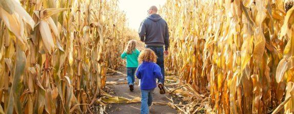 Father and 2 children walking through a corn maze.