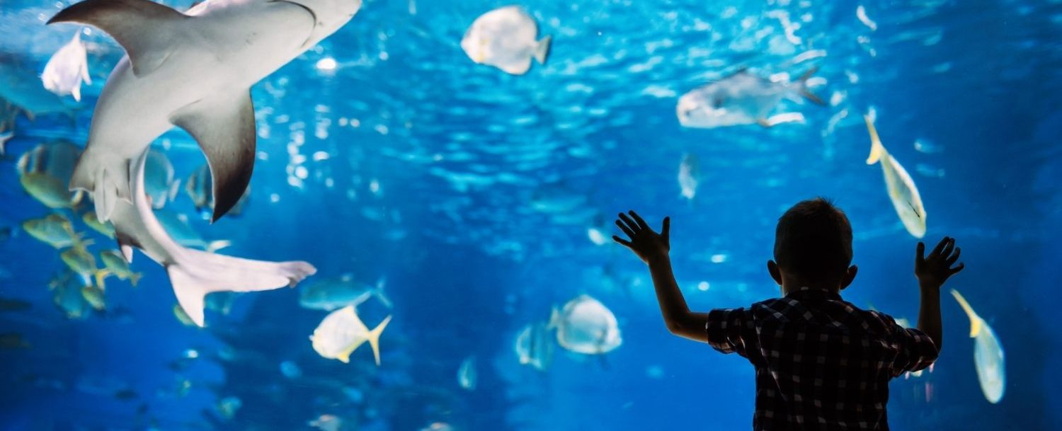 Silhouette of young child watching a shark swim in a giant aquarium.