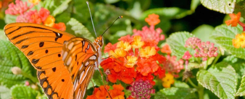 Wing-Haven-Gardens-and-Bird-Sanctuary.jpg